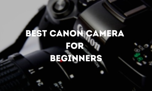 Best Canon Camera For Beginners