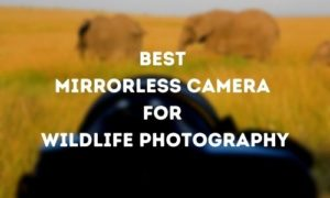 Best Mirrorless Camera for Wildlife Photography