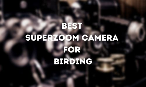 Best Superzoom Camera for Birding