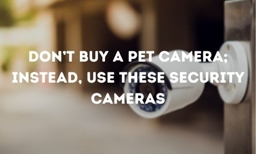Don't Buy a Pet Camera; instead, use these Security Cameras