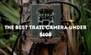 The Best Trail Camera Under $100